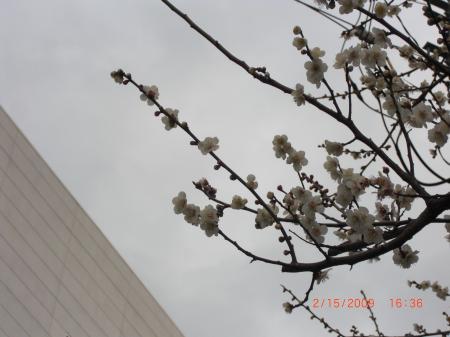 ume tree 3