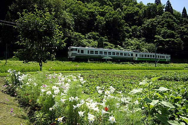 kosugawayuri