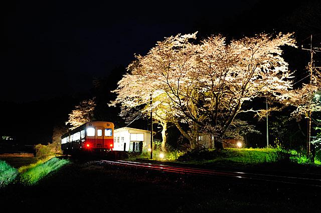 ookuboyozakura