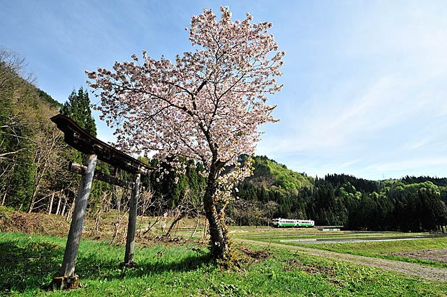kosugawa