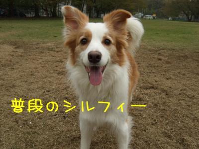 2008_041601041.jpg