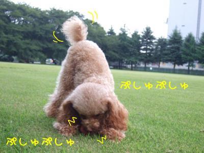 2008_082000041.jpg