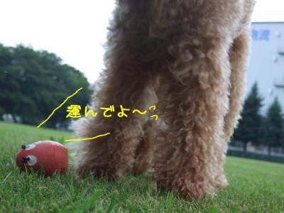 2008_082000061.jpg