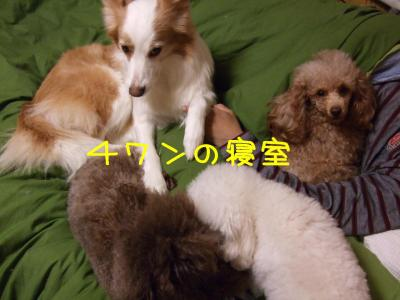 2008_113000171.jpg