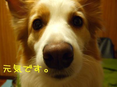 2008_120100141.jpg