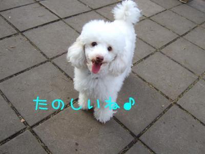 2008_120700491.jpg
