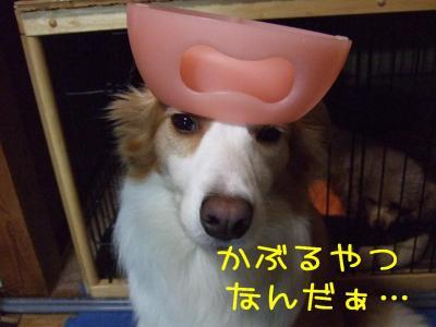 2008_121000041.jpg