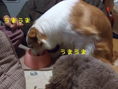 2008_121000071.jpg