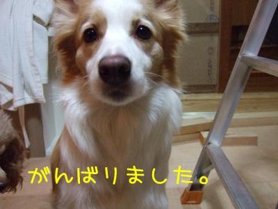 2009_010600701.jpg
