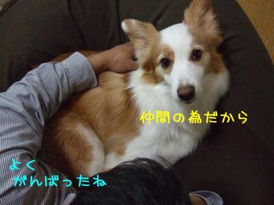 2009_010600791.jpg