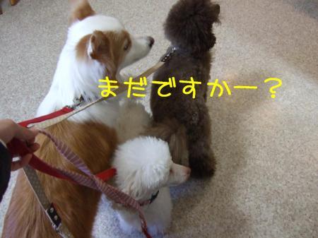 2009_011100061.jpg