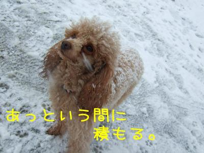 2009_011100501.jpg
