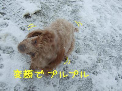 2009_011100511.jpg