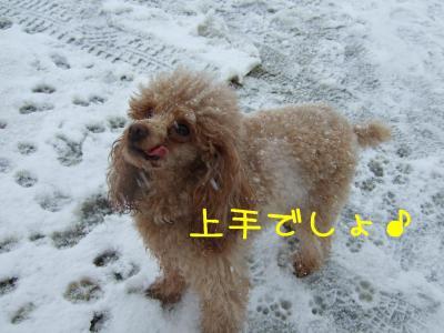 2009_011100541.jpg
