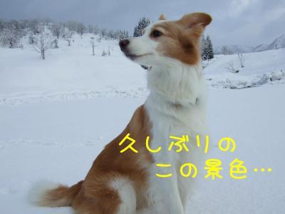 2009_011100551.jpg