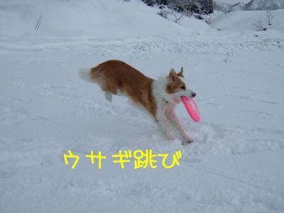2009_011100771.jpg
