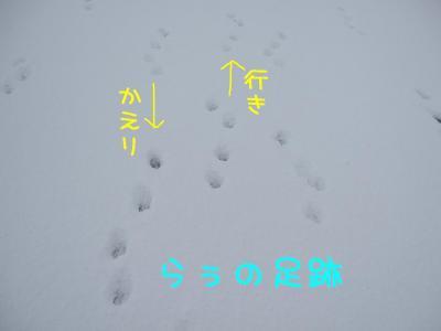 2009_011101521.jpg