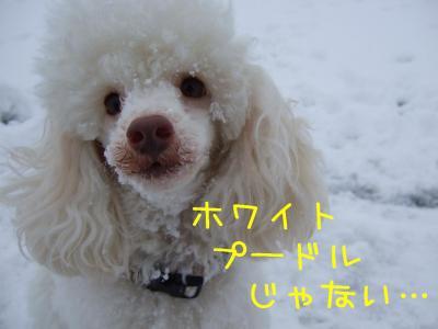 2009_011101641.jpg