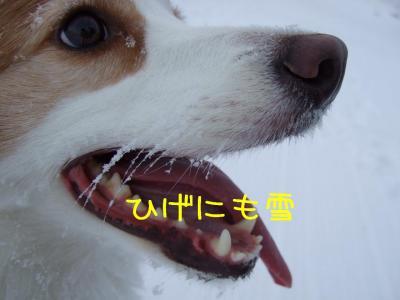 2009_011102131.jpg