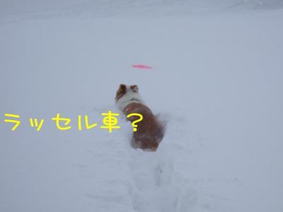 2009_011102291.jpg