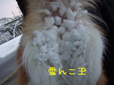 2009_011102441.jpg