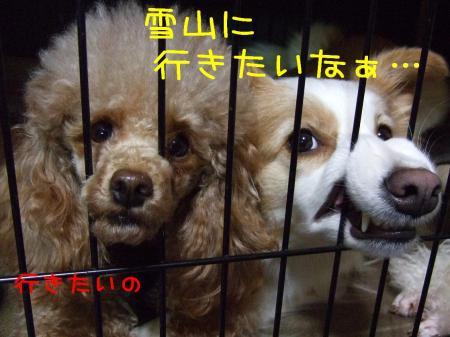 2009_013000151.jpg