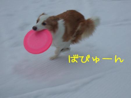 2009_020200461.jpg