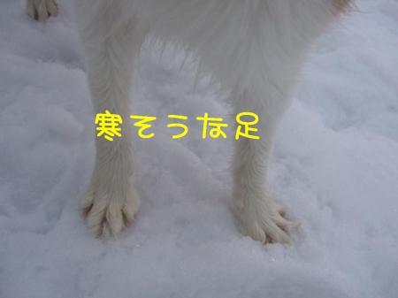 2009_020200681.jpg
