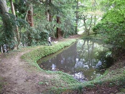 地蔵院横の池