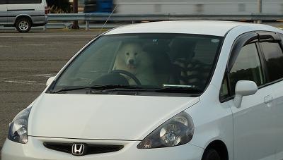 運転手さんだワン!