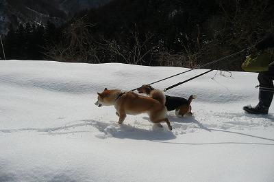 谷川岳PA
