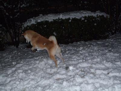 雪でぴょんぴょん