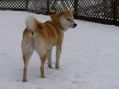 雪のドッグラン~