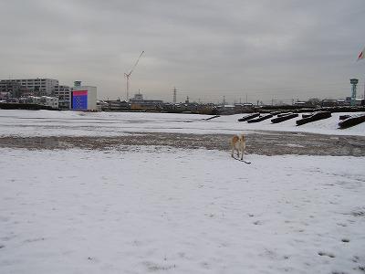 雪の競馬場