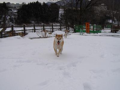 雪雪雪~♪