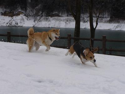 雪雪~~♪