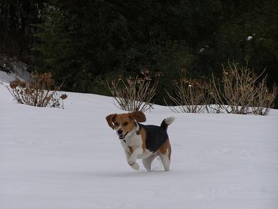 雪雪~~♪♪