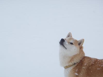 雪はどこから?
