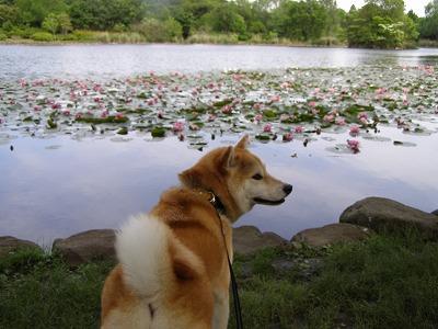 池見るあきの
