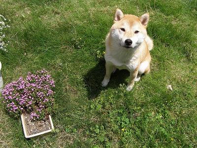 花とあきの