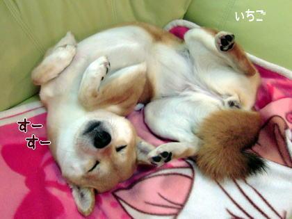 かわいい寝姿♪