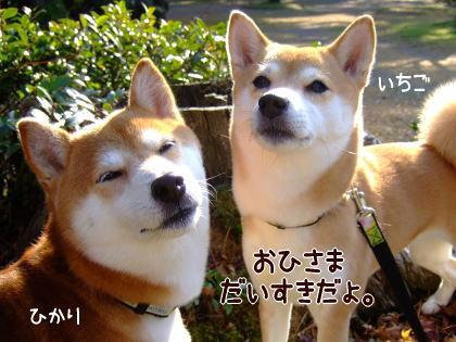 ぽかぽか~♪
