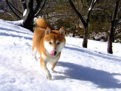 お鼻に雪★