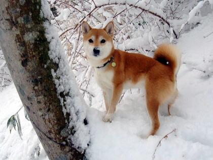 お鼻の雪がかわいい~