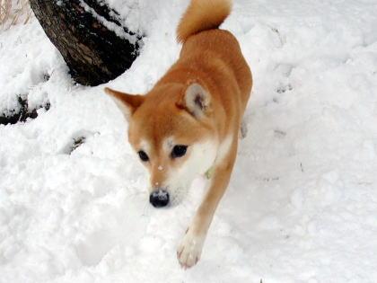 またお鼻に雪~♪