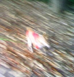 20081124-3.jpg