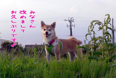 20090629-1.jpg