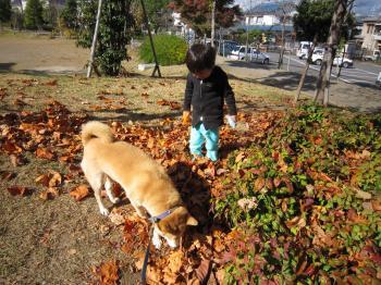 公園の中。枯葉に埋もる。