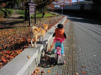 公園までの道。紅葉してます。