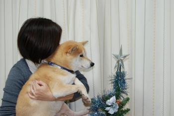 クリスマスツリーです♪